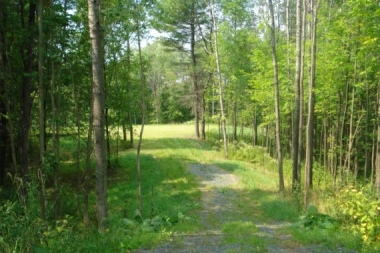 Photo of lot with trees and grass in Vermont ready for manufactured home installation