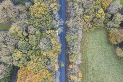 An aerial photo of a road between two rows of trees in the autumn.